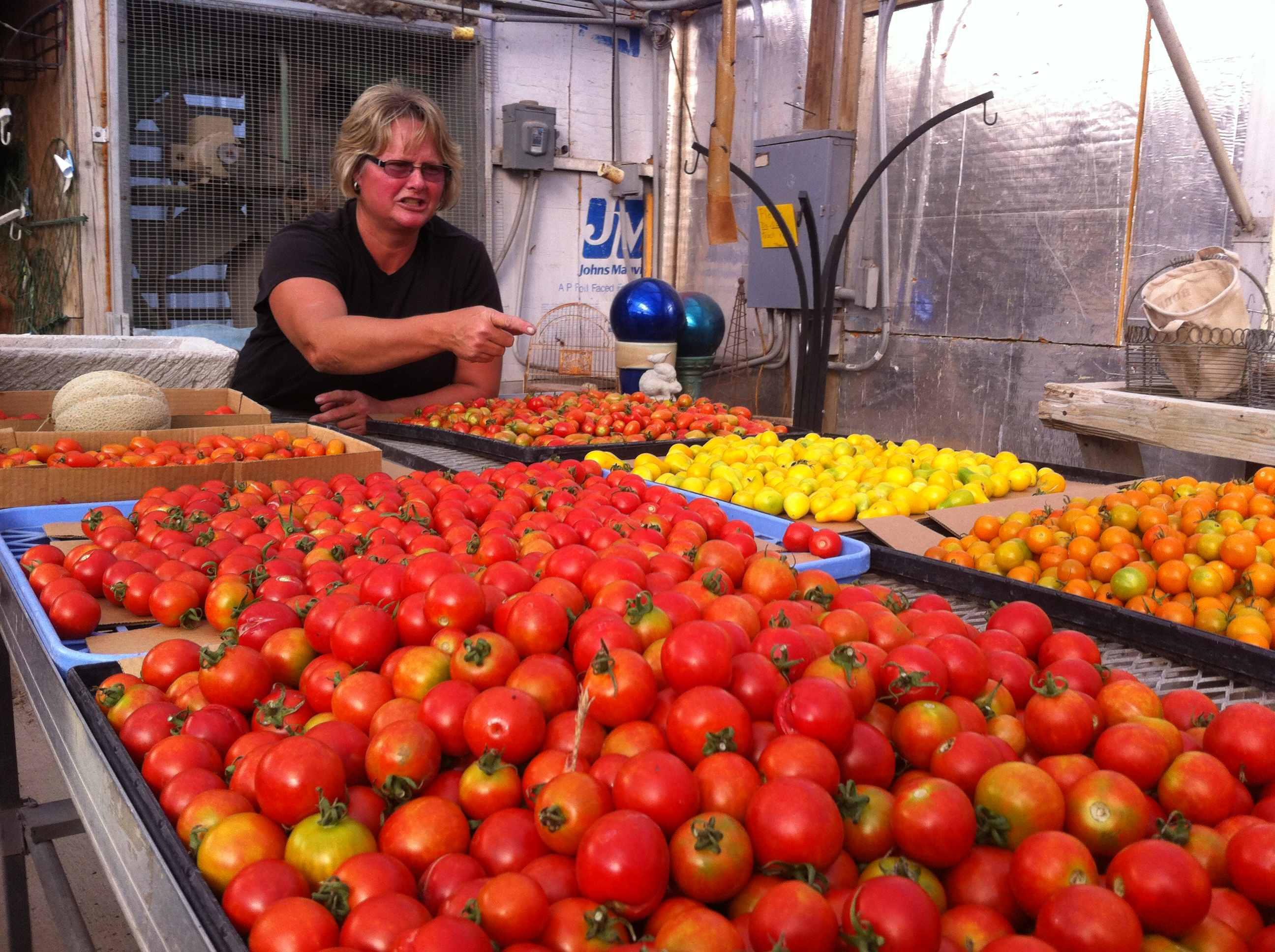 Kaylene Kroul Instructing Us in Tomato Varieties